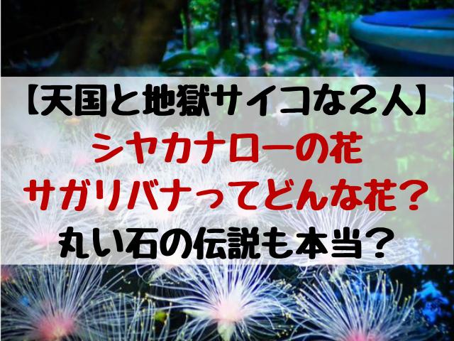 シャカナローの花はサガリバナ?ホノホシ海岸の石の伝説は関係ある?天国と地獄