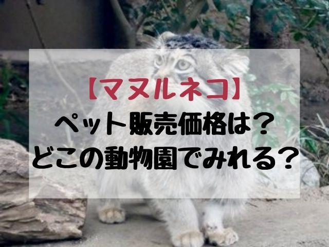 マヌルネコのペット販売の価格いくら?動物園どこで見れるかも紹介!
